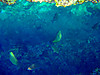 Blue_cave20