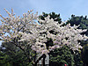 Imperial_palace51