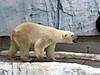 Ueno_zoo_bear